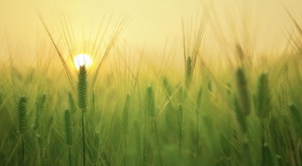 Als je ontspannen bent kun je meebuigen net als het gras in het veld. Ontspanning Balans en Flow door middel van Reconnective Healing Chakra Healing en Reiki